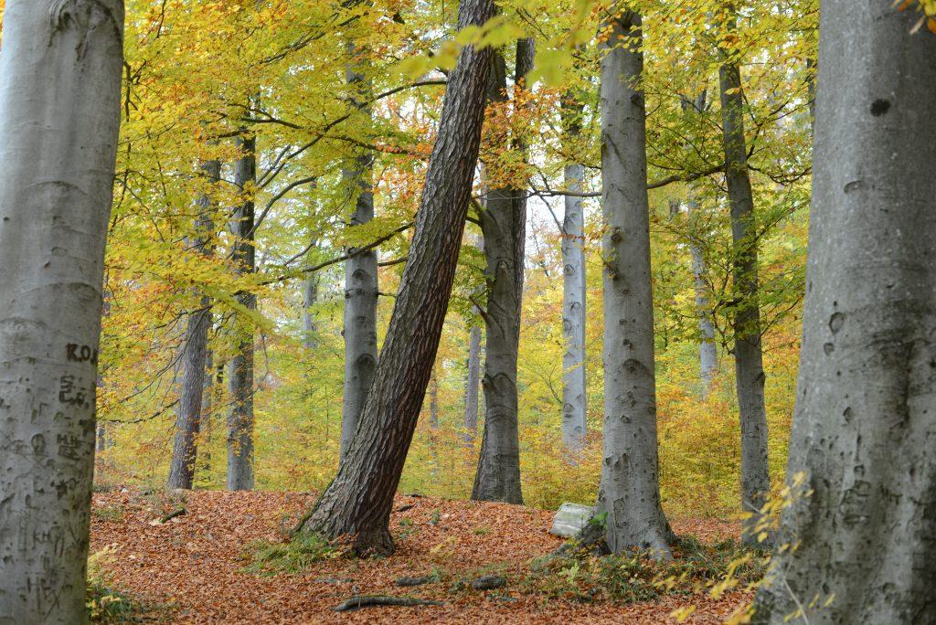 Wood Zurich